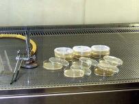 微生物試験